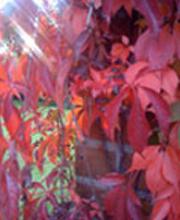 Herbst-Kur